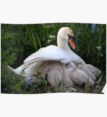 Maternal wings Poster