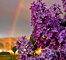 Rainbow over lilacs - the month of May by Dan Florence