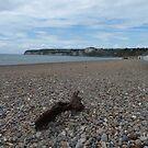 On the Beach by jab03