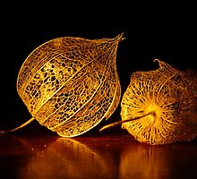Chinese Lantern Seed Pods by Gabrielle  Lees