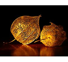 Chinese Lantern Seed Pods Photographic Print