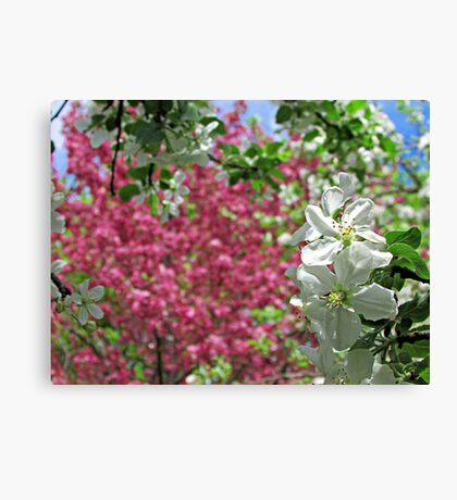 May Blossoms Canvas Print