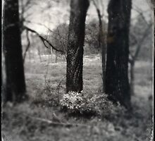 Trees from My Backyard by Rene Hales