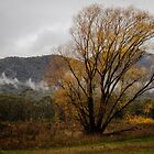 Golden Tree in the Mist at Bright Victoria by Pauline Tims