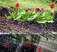 Red Flowers and Reflections by Nazareth