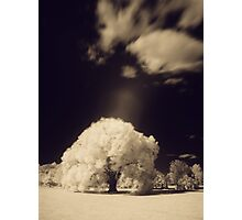 Infra-red Springtime at the Arboretum -Study No. 2 Photographic Print