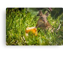 Field Mouse on Alert Metal Print
