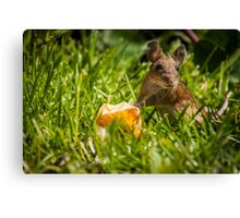 Field Mouse on Alert Canvas Print