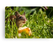 Field Mouse in the Grass Canvas Print