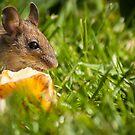 Field Mouse Posing by Georden