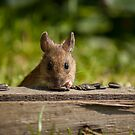 Field Mouse Watching by George Davidson