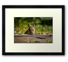 Field Mouse Watching Framed Print