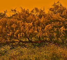 Tree Surronded by Yellows by Nira Dabush