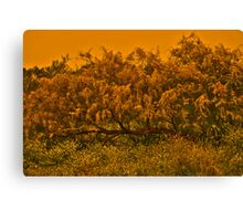 Tree Surronded by Yellows Canvas Print