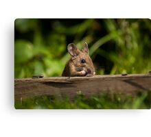 Field Mouse Snack Bar Canvas Print