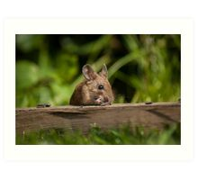 Field Mouse Eating Art Print