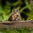 Field Mouse Eating by Georden