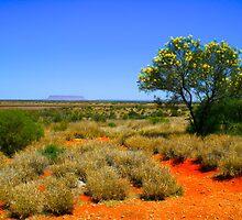 Desert Spring by Angelique Rauschenbach