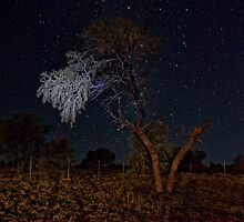 Night in the Territory by GRACE COSTA