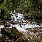 Liffey Falls by Rosie Appleton