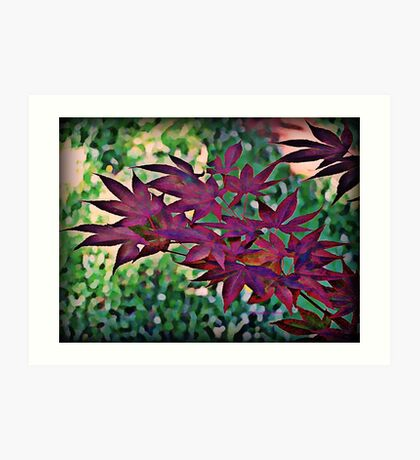 Japanese Maple - A Watercolor Art Print