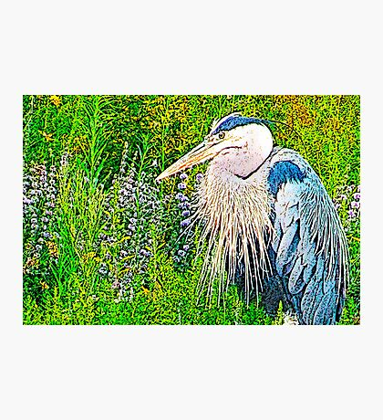 Great Blue Photographic Print