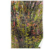 Leaves and Blossoms Poster