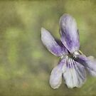 Sweet Wood Violet by steppeland