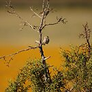 Birds On A Tree. by mikepemberton