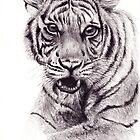 Tiger by Elisa Camera