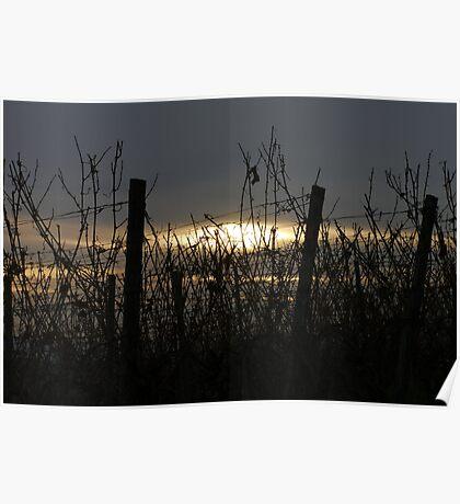 Sonnenuntergang Poster