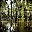 Swampland Louisiana bayou, USA by PhotoStock-Isra
