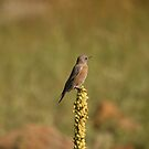 Mountain Bird. by mikepemberton