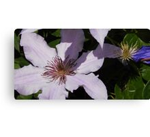 Lavender Clematis Before & After Canvas Print