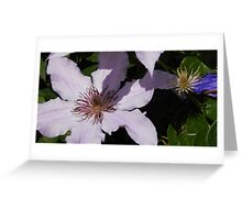 Lavender Clematis Before & After Greeting Card