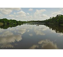 Gator Pond 6 Mile Cypress Slough  Photographic Print