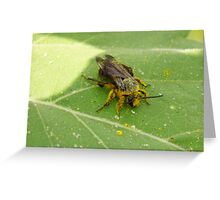 Overdosed On Pollen Greeting Card