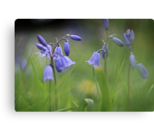 Bluebells at Downton abbey Canvas Print