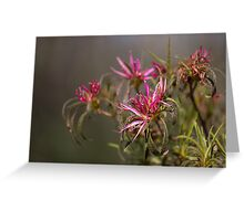 Floral at Riverbanks Botanical Garden March 2013 Greeting Card