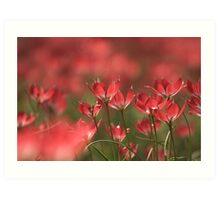 Red heads of tulips at Downton abbey Art Print