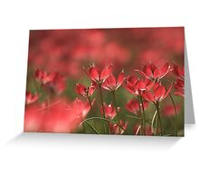 Red heads of tulips at Downton abbey Greeting Card