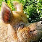 Piggy Paradise by Ladymoose
