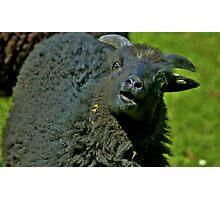 Hey Ewe!!! Photographic Print
