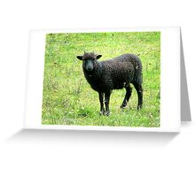 The Black Sheep of the Family..........? Greeting Card