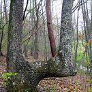 a lovely bent u tree by LoreLeft27