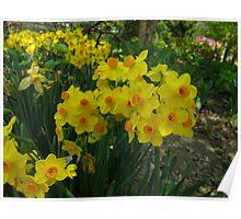 Narcissus Garden Poster