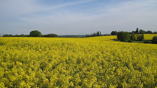 suffolk spring by uncleblack