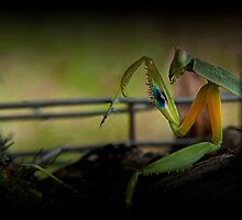 Praying Mantis Mark.... by Josie Jackson