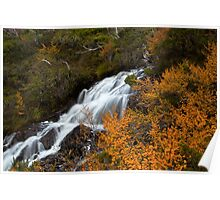 Fagus and Falls  Poster