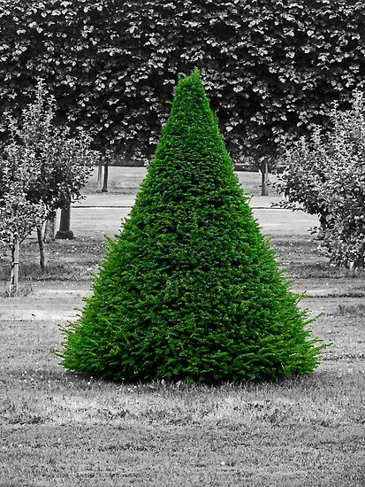 Conical Conifer by Yampimon